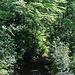 Zurück im Bois de l'Alier.