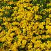 Blumen gibt es heute à discrétion in allen Farben und Formen