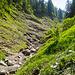 ...zum Innenbach und diesem entlang talauswärts