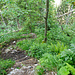 Wunderbar wilde Waldlandschaften