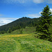 Über Wiesen dem Parpfienzsattel entgegen. <br />Der Waldschopf im Hintergrund ist der Loischkopf.