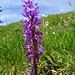... und Orchideen ...