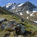 Alpen-Azaleen blühen auf den Felsen, am Pfad  ins  Brändjitälli