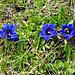 Blaues Trio 2