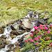 Viele Seitenbäche, erste Alpenrosen