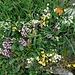 Bunte Blumen und Kräuter, es duftete herrlich