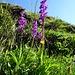 auch die Orchideen sind wieder Wegbegleiter