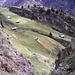 Oberaletsch mit glücklichen Kühen unter den übriggebliebenen Felsen.
