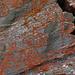 schon seit  vielen Jahren schaue ich mir diese Flechten (Psedudo-Felsmalereien) am Ochehorn an