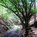 Es folgt eine etwas weniger spannende Passage, in der es mal rechts, mal links abbiegend durch den Wald südlich des Kalmutgipfels geht. Dann geht es ins dunkle Burdental hinunter, schon Richtung Boppard.