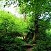 ...diesmal durch wilden Urwald...
