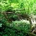 ...über umgestürzte Bäume und an undurchdringlichem Buschwerk vorbei. Sieht nicht so aus - aber das ist der Weg!