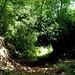 Wildromantisch führt der Steig durch grüne Tunnelröhren...