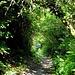 Noch mehr grüne Tunnelröhren!