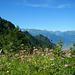 Ausblick vom Wangsattel zu den Glarner Hochalpen.