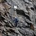 ...und sind bereits am zweiten Teil des einfacheren Klettersteiges mit dem Calanda Zapfhahnen im Fels.
