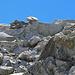 hier bin ich beim schwierigen Abstieg vom See neben dem Gletscher ins Tal, - hoffentlich bleibt dieser grosse Felsbrocken noch etwas länger dort wo er ist.