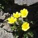 in all der Steinwüste gibt es aber auch einige Blumen