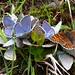Lej da Cavloc-Impressionen IV (Schmetterlings-Basislager...;-))