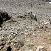 Il terreno non è dei migliori, terriccio e piccole pietre