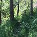 Föhren, Felsenbirnen, wolliger Schneeball, Pfeifengras: der Pflanzenmix in der Fallätsche entspricht dem speziellen Standort.