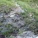 Wegspur zwischen Tschinglen und Mättli: Hier hat eine Runse die Spur weggespült, doch ein Seil dient als Steighilfe.