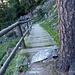 la scala nel bosco lungo il sentiero Roentgen