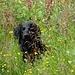 Aron im feuchtem Gras