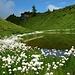 Wollgras zieren den kleinen See