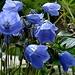 Glockenblumen und viele andere Blumen blühten um diese Jahreszeit
