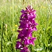schöne Orchideen ...