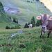 diese Kuh hat mich so grimmig angeschaut, vielleicht hat sie mit Steinen nach mir geworfen.