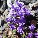 Diese Blumenvielfalt