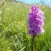 eine weitere der vielen Orchideen