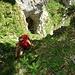 im letzten Aufschwung oberhalb der Grotte