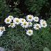 auch diese Wiesenblumen ...