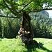 aussergewöhnliche Baumskulptur