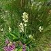 Ein weiteres Bouquet