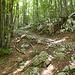 Der Abstiegsweg nach Drezniske verläuft zum größten Teil durch schattigen Wald