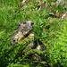 Auf der Hochebene treffen wir auf viele putzige Murmeltiere.