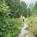 tratto di sentiero in discesa