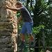 Die Ruine Neu Schauenburg ist zwar gesperrt, doch das hält keine HIKR's auf :-)