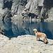 breve deviazione al Lac de Capitello... spettacolo assicurato!