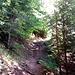 Der wurzelige Trail nach Harder Kulm