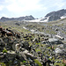 Geissen vom Val Grialetsch