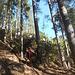 parte bassa nella pineta