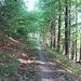 ...zum Glück immer im Wald