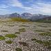 Spannender Alpenboden im Aufstieg zur Cima del Serraglio