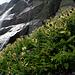 Eine der schönen Wasserfälle.