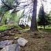 Bellissima casa ristrutturata in mezzo al bosco di larici.